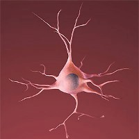 Neuron illustration (NIH)