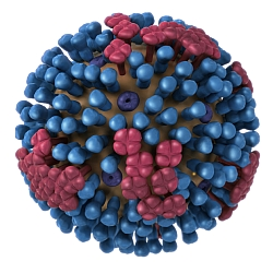Influenza ultrastructure illustration (Dan Higgins, CDC)