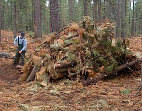 Slash pile (CA.gov)