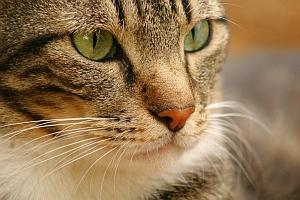Cat (fnal.gov)