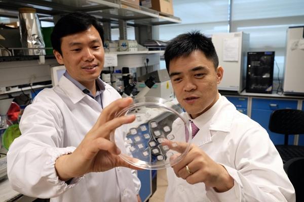 Cheng Peng and Xu Chenjie