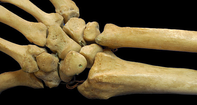 Bones in the wrist and hand