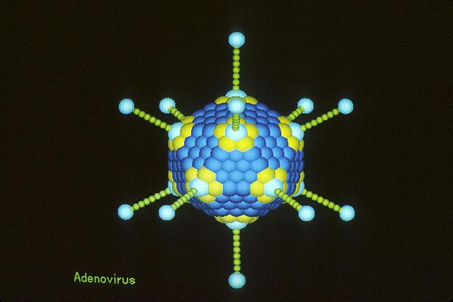 Adenovirus illustration